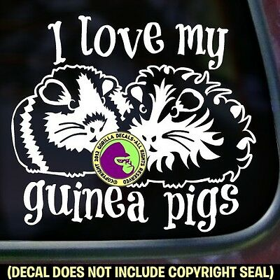 I LOVE MY GUINEA PIGS Vinyl Decal Sticker Cavy Pig Love Car Window Wall Sign
