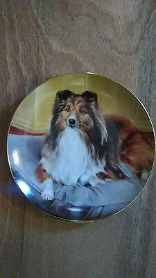 Shetland Sheepdogs, Comforts Of Home 8 1/8 Inch Collector Plate By Aldrich ~