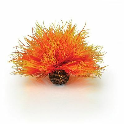 REEF ONE BIORB SEA LILY in FLAME 0822728007280