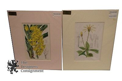 2 19th Cent. Floral Botanical Engravings by Curtis 1831 41 Hand Colored Antique
