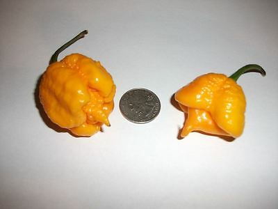 25 Premium  Yellow Carolina Reaper Seeds, World's Hottest Pepper, Organic Grown