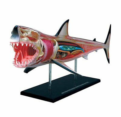 Thames & Kosmos ANATOMY MODEL Puzzle GREAT WHITE SHARK 20pc