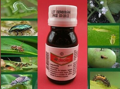 Insecticide for Lawn - Kill Beetles , chafer bugs - 30ml ( make 80L )