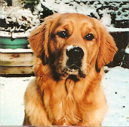 Golden Retriever Christmas Cards - Pack of 5: Lewis