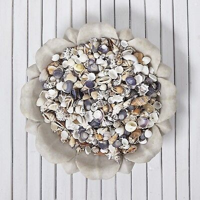 NEW Natural Small Mixed Shells Bulk 200g Pack for wedding decoration