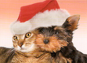 Yorkie Yorkshire Terrier Cat Christmas Card Box of 12
