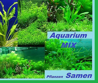 30x Aquarium Plants Seeds Mix Light Sowing Novelty Variety Seed #206