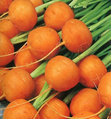 300 PARISIAN CARROT SEEDS HEIRLOOM 2019 (non-gmo heirloom seed)