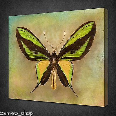 Green Yellow Butterfly Vintage Wall Art Picture Canvas Print Ready To Hang