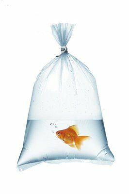 "Fish Transport Bags 17"" x 6"" Strong 250 Gauge Clear Transparent Plastic x 25"