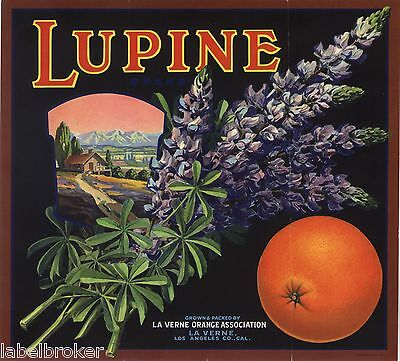 Orange Crate Label Rare Original Lupine La Verne Vintage Advertising California