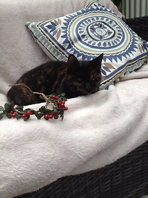 Please buy Christmas dinner for a Cats Protection rescue cat - Ruby