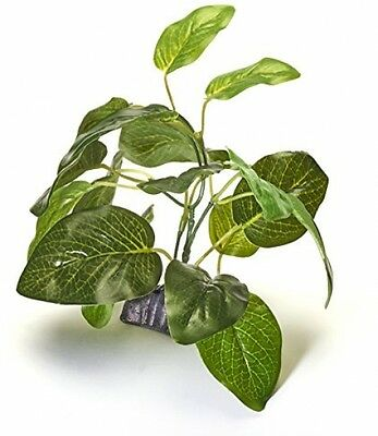 Pistachio Pet - Aquarium Plant 6 /15cm Dwarfed Anubias With Base
