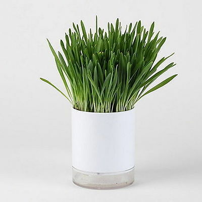 Wheat Seed Cat Grass Growing Complete Kit Healthy Pot noovira