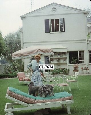 Lucille Ball plays with Her Dogs in the Back Garden of Her Home Photo