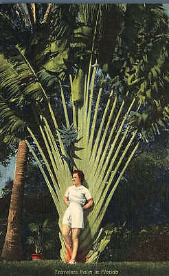 Pretty Girl in Front of Travelers Palm Florida 1943 Teich Nature Postcard