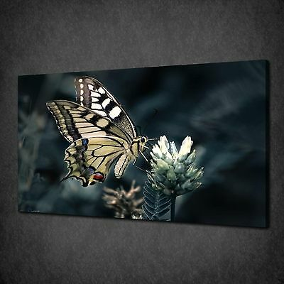 Yellow Swallowtail Butterfly Canvas Wall Art Print Picture Poster Ready To Hang