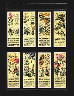 tea cards wild flowers in their familys 2nd 1937 full set