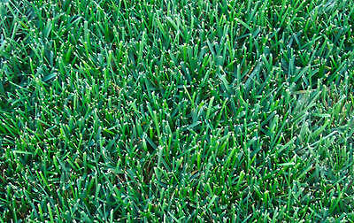Curator Parks Blend Grass Seed Lawn Yard