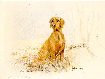 Vizsla Limited Edition Print by UK Artist Gill Evans