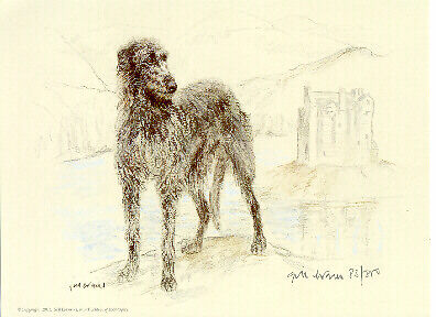 Scottish Deerhound Limited Edition Print by UK Artist Gill Evans