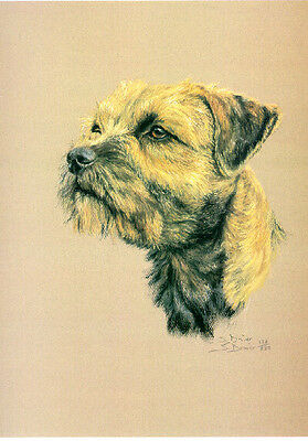 Border Terrier Limited Edition Print by UK Artist Sue Driver
