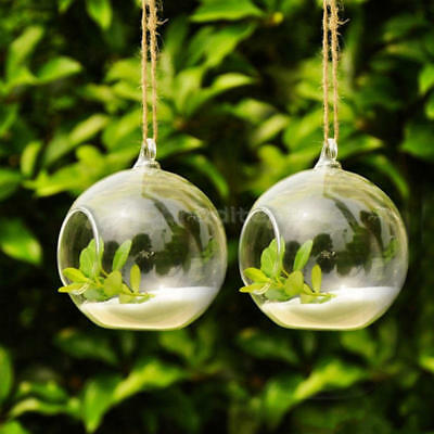 Round Ball Hanging Decor Glass Flower Vase Plant Terrarium Container With Holder