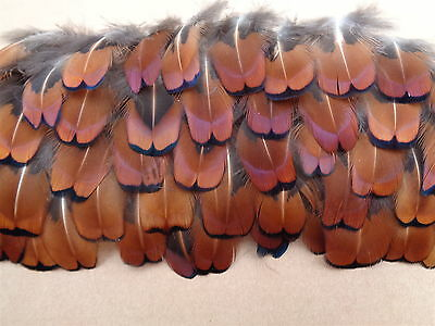 "100 Cock Pheasant Neck Feathers 1"" - 2"" - Christmas Wreath Decorations"