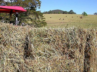 Lucerne Hay - Good Livestock Feed - Small Square Bales