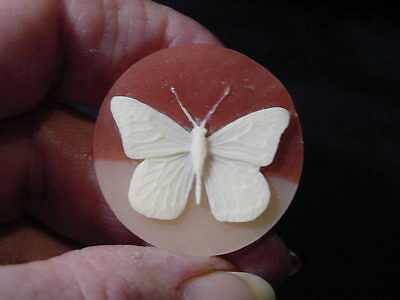 Vintage Celluloid Cameo Of Butterfly