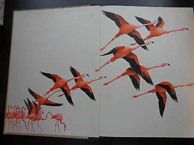 Vtg antique hardcover book The World of Birds James Fisher Roger Tory Peterson