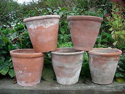 "5 Old  Hand Thrown Terracotta Plant Pots Pelargonium Pots 5.5""  Diameter (15)"