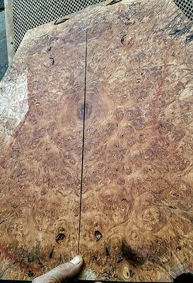 AWESOME 5a burl MAPLE top  15X 20.5X 1/4: GUITAR, BASS, LUTHIER, CRAFT b