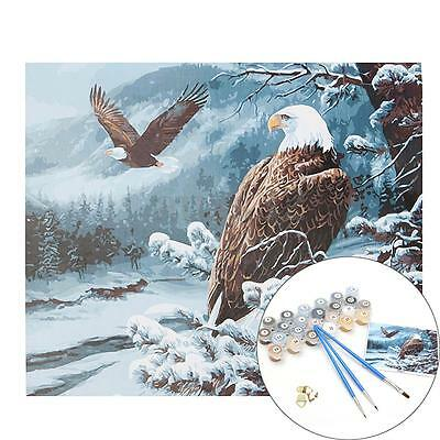 """8pcs DIY Paint By Number 16 x 20"""" Kit Cool Eye Of Eagle On Canvas With Box"""