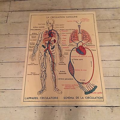 "Double Sided French School Vintage Poster About The Body ""digestion"", ""sang"""