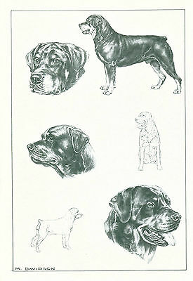 Dog Art Print Rottweiler Dog by Davidson