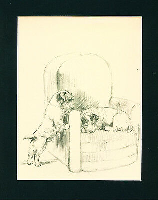 Dog Print 1934 Sealyham Terrier Dogs Sleep in Chair by Barker VINTAGE