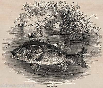 Genuine 1845 Print Perch Fly Fishing Angling Fish Rod Tackle River Basket 2