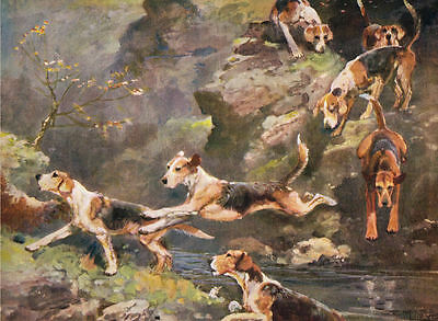 Rare 1934 Print Fox Hunting - Welsh Fox Hounds - by T.Ivester LLoyd