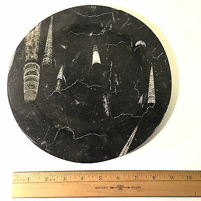 "9 3/4"" Black Polished Marble Stone Plate With Visible  Fossils Ocean Jura"