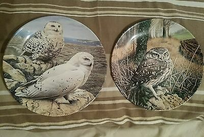 2x Wedgwood plates The majesty of owls collection
