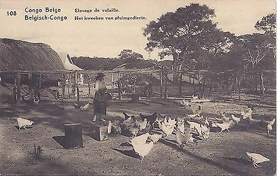 Belgian Congo 1910s 15c picture stationery of chickens used