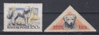 Dogs: Kuvasz, 2 different stamps