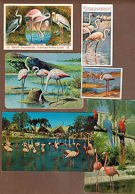 FLAMINGOS: Collection of Scarce Antique Cards (1900)