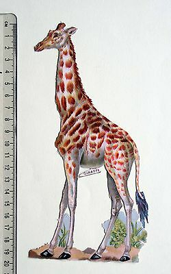 V. Large Victorian Die Cut Embossed Scrap Giraffe 10 X 20 Cm Tall