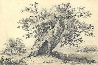 English School 19th Century Graphite Drawing - Study of a Tree in a Landscape