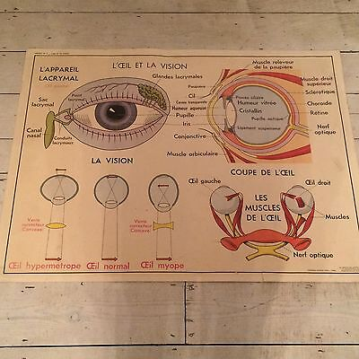 """Double Sided French School Vintage Poster About The Body, """"l'œil"""", """"l'oreille"""""""