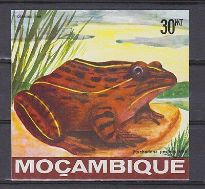 Mozambique  tiere animals frosch frog 1985