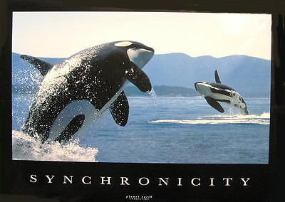 """Wale Poster """"orka Synchronicity - Killerwale Whales"""""""