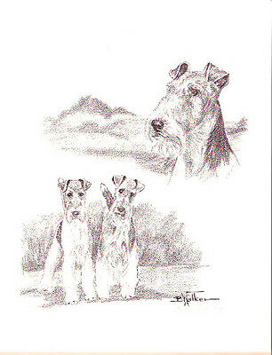 Airedale Terrier Sketches Black White LEd Art Print by USA Artist Barbara Walker
